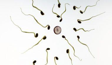 Sperm Hacmi Nasıl Artırılır?
